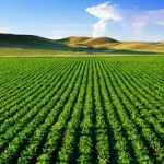 Hosen Capital Completes Final Closing For $440M Third Agribusiness Fund