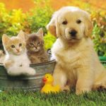 IDG Leads $53M Round In Chinese Pet Products E-Commerce Platform Epet.com