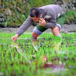 Ant Financial's Rural Strategy Focuses On China's Microfinance Opportunities